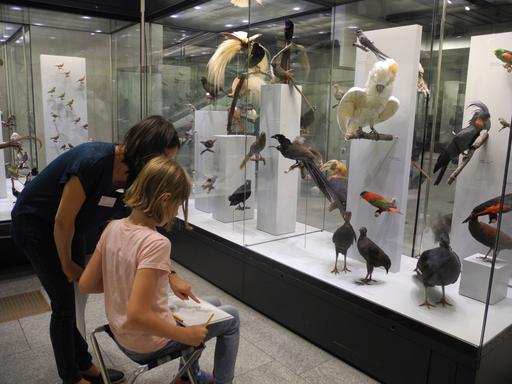 Schau genau! Tiere zeichnen im Zoologischen Museum