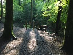 Ferien im Wald - das Plätzli